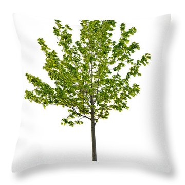 Isolated Young Maple Tree Throw Pillow
