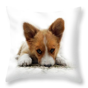 It Wasn't Me Corgi Throw Pillow
