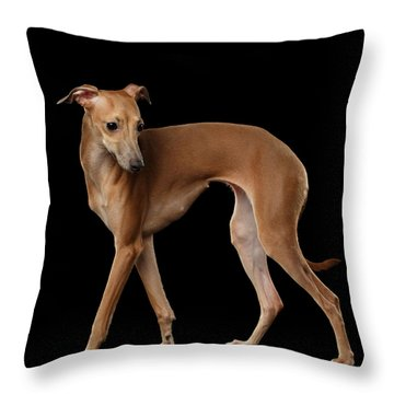 Italian Greyhound Dog Standing  Isolated Throw Pillow