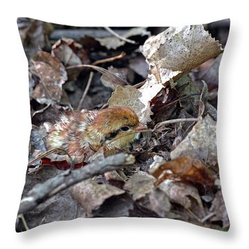 It's A Baby Grouse Throw Pillow