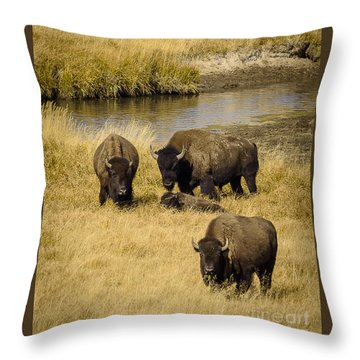 Throw Pillow featuring the photograph It's A Family Affair by Sandy Molinaro