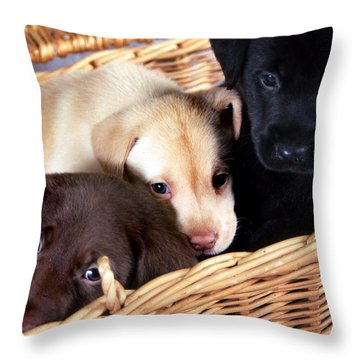 It's A Picnic Throw Pillow by Skip Willits