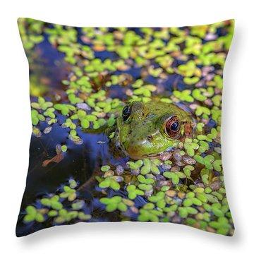 Bullfrogs Throw Pillows