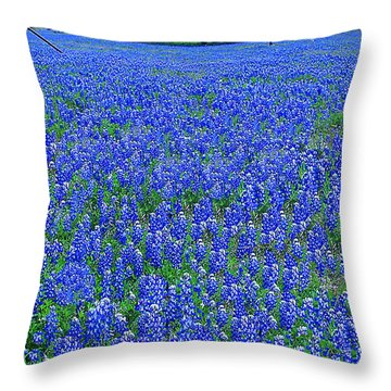 It's Spring - Texas Bluebonnets Time Throw Pillow