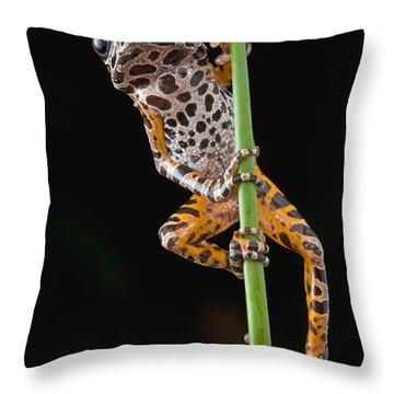 Ivory Coast Running Frog  Ghana Throw Pillow