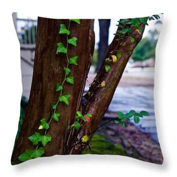 Ivy In Williamsburg Throw Pillow