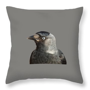 Jackdaw Corvus Monedula Bird Portrait Vector Throw Pillow