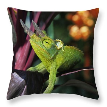 Jacksons Chameleon On Leaf Throw Pillow by Dave Fleetham - Printscapes