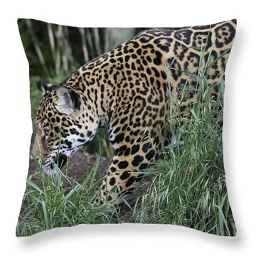 Throw Pillow featuring the photograph Jag by Gary Bridger