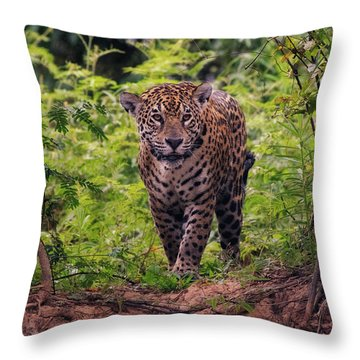 Jaguar      Throw Pillow by Wade Aiken