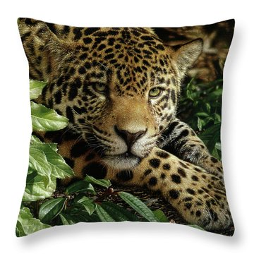 Jaguar - At Rest Throw Pillow