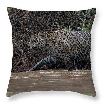Jaguar In River Throw Pillow by Wade Aiken