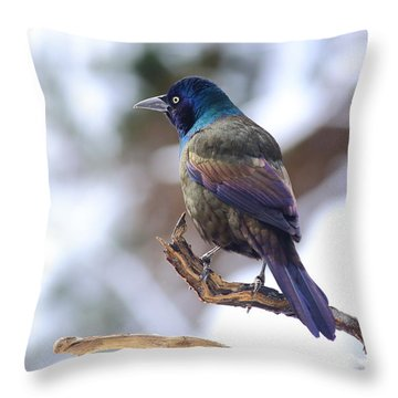Throw Pillow featuring the photograph January Grackle by Daniel Reed