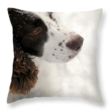 January Spaniel - English Springer Spaniel Throw Pillow