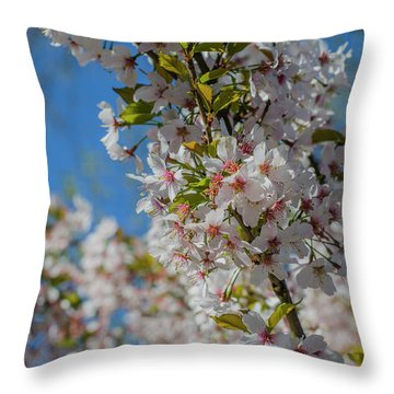 Japanese Cherry  Blossom Throw Pillow by Daniel Precht