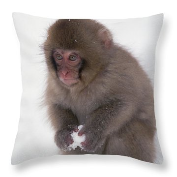 Japanese Macaque Macaca Fuscata Baby Throw Pillow by Konrad Wothe