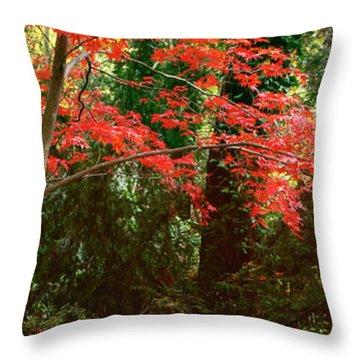 Japanese Maple Throw Pillow by John Pagliuca