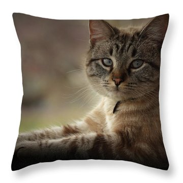 Throw Pillow featuring the photograph Jaspurr by Kim Henderson
