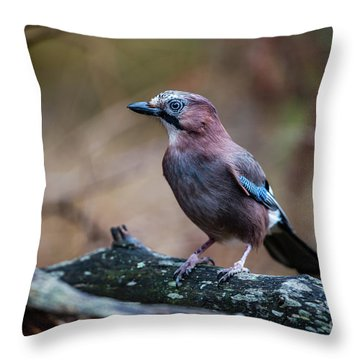 Jay Watch Throw Pillow by Torbjorn Swenelius