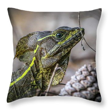 Throw Pillow featuring the photograph Jesus Lizard #2 by Tom Claud