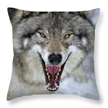 Throw Pillow featuring the photograph Joker by Tony Beck