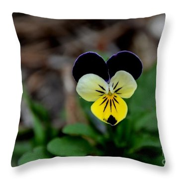 Jonny Jump Up - Relative To A Pansy Throw Pillow