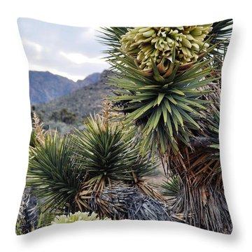 Joshua Tree Bloom Rainbow Mountain Throw Pillow