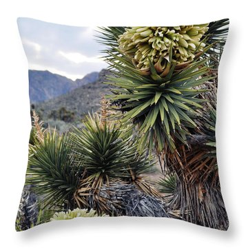 Joshua Tree Bloom Rainbow Mountain Throw Pillow