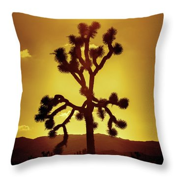 Throw Pillow featuring the photograph Joshua Tree by Stephen Stookey