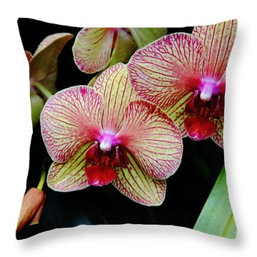 Joy Within Throw Pillow