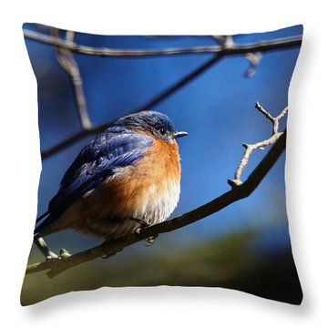 Throw Pillow featuring the photograph Juicy Male Eastern Bluebird by Robert L Jackson