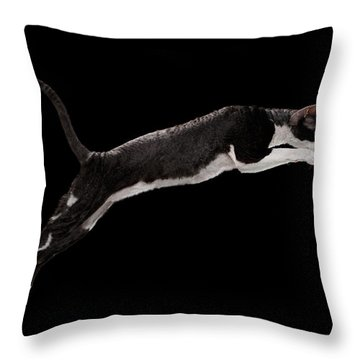 Throw Pillow featuring the photograph Jumping Cornish Rex Cat Isolated On Black by Sergey Taran