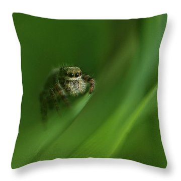 Jumping Spider Contemplating Life Throw Pillow