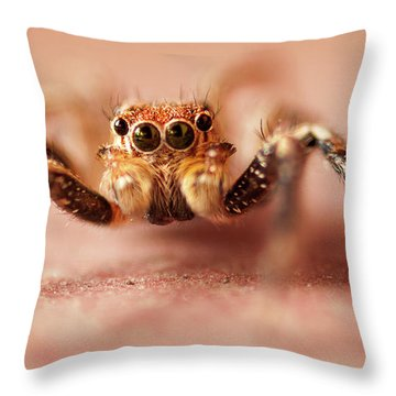 Jumping Spider Throw Pillow