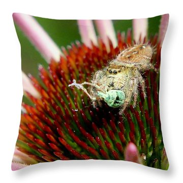 Jumping Spider With Green Weevil Snack Throw Pillow
