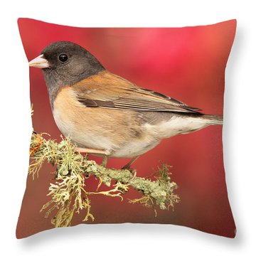 Throw Pillow featuring the photograph Junco Against Peach Blossoms by Max Allen