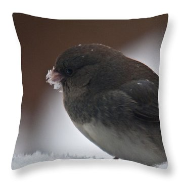 Junco In Snow Throw Pillow by Douglas Barnett