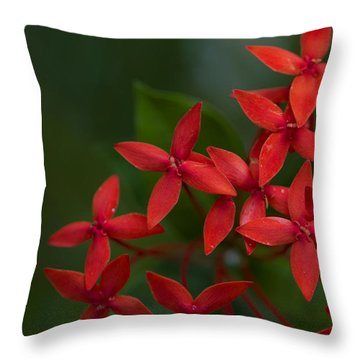 Jungle Geranium Throw Pillow