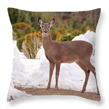 Throw Pillow featuring the photograph Junior by Angel Cher