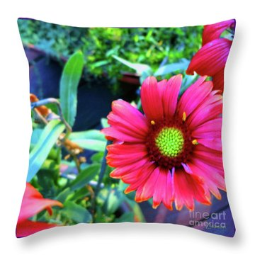 Just Brilliant Throw Pillow