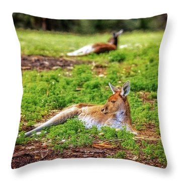 Just Chillin, Yanchep National Park Throw Pillow by Dave Catley