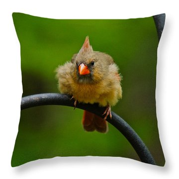 Throw Pillow featuring the photograph Just Doing A Little Feather Fluffing by Robert L Jackson