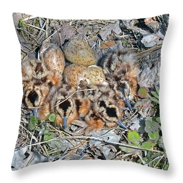 Just Hatched American Woodcock Chicks Throw Pillow