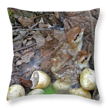Just Hatched Ruffed Grouse Chicks Throw Pillow