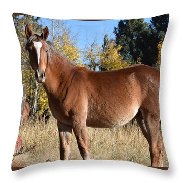 Horse Cr 511 Divide Co Throw Pillow
