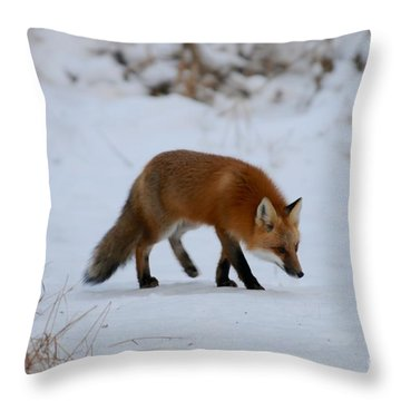 Just Hunting For Breakfast Throw Pillow by Sandra Updyke