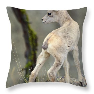 Throw Pillow featuring the photograph Just Kidding Around by Bruce Gourley