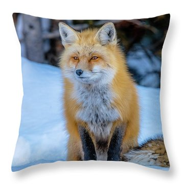 Just Watching Throw Pillow