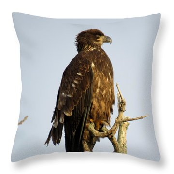 Juvenile Bald Eagle 1 Throw Pillow