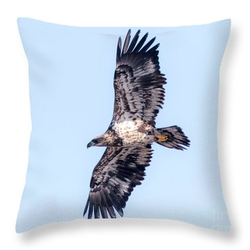 Juvenile Bald Eagle 2017 Throw Pillow by Ricky L Jones
